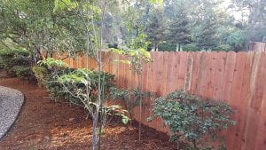 Redwood Dog Ear Fence – 10