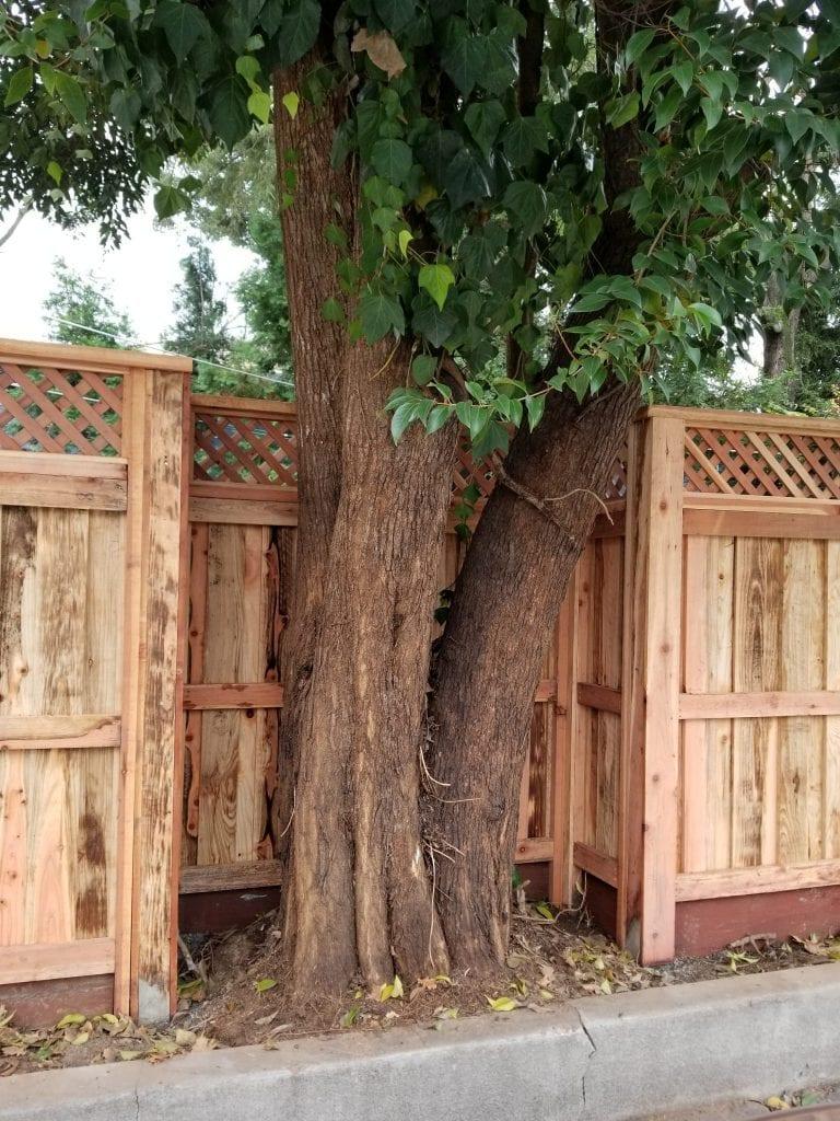 Board on Board with Diagonal Lattice Tree Accommodation – 3